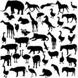 Ajuste animais e pássaros das silhuetas no jardim zoológico Fotos de Stock Royalty Free