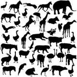 Ajuste animais e pássaros das silhuetas no jardim zoológico Imagens de Stock