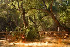 Ajuste arborizado no vale de Carmel de Califórnia Fotos de Stock Royalty Free
