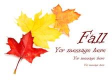 Ajuste as folhas coloridas da queda do outono da coleção imagem de stock