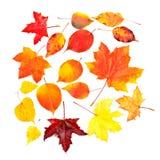 Ajuste as folhas coloridas da queda do outono da coleção fotos de stock