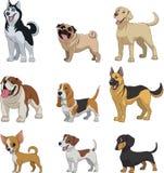 Ajuste cães do puro-sangue Imagem de Stock Royalty Free