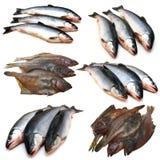 Ajuste a coleção dos peixes imagens de stock royalty free