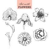 Ajuste com as flores tiradas mão Imagem de Stock