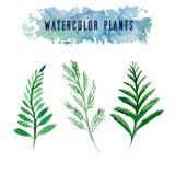 Ajuste com as plantas do vetor da aquarela Fotos de Stock