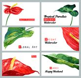 Ajuste com cartões da aquarela Calla e folhas vermelhos tropicais Fotos de Stock