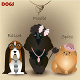 Ajuste com cães do puro-sangue Foto de Stock