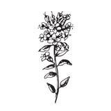 Ajuste com flores do desenho fotos de stock