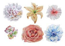Ajuste com flores Rosa Alstroemeria Peônia Lírio anemone Rosa Ilustração da aguarela Foto de Stock