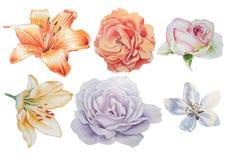 Ajuste com flores Rosa Lírio Ilustração da aguarela Fotografia de Stock