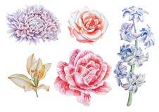 Ajuste com flores Rosa Lírio Peônia Jacinto Ilustração da aguarela Imagens de Stock
