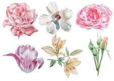 Ajuste com flores Rosa Lírio Tulipa hibiscus Ilustração da aguarela Imagem de Stock Royalty Free
