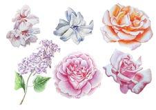 Ajuste com flores Rosa lilac Flor Ilustração da aguarela Imagens de Stock