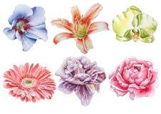 Ajuste com flores Rosa Orquídea Lírio Peônia Gerbera Ilustração da aguarela Foto de Stock