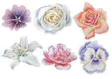Ajuste com flores Rosa pansies Lírio geranium Peônia Ilustração da aguarela Imagens de Stock