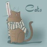Ajuste com gatinhos dos siames Imagem de Stock