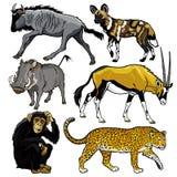 Ajuste com os animais selvagens de África ilustração stock