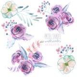 Ajuste com os ramalhetes florais isolados da aquarela das rosas e das folhas roxas Imagem de Stock