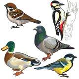 Ajuste com pássaros europeus ilustração do vetor