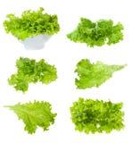 Ajuste com salada da alface Fotos de Stock Royalty Free