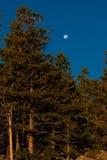 Ajuste da lua em um céu azul Imagens de Stock