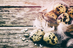 Ajuste da Páscoa com ovos de codorniz Fotografia de Stock Royalty Free