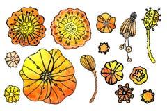 Ajuste da papoila das flores Desenho da aquarela com um curso do contorno em um fundo branco, para o projeto dos convites, cart?e ilustração do vetor