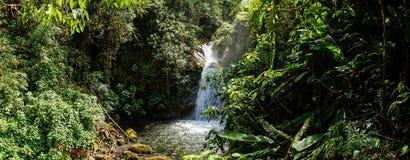 Ajuste da selva com a cachoeira na reserva natural de Cloudbridge, Costa Rica fotografia de stock