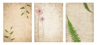 Ajuste da vária textura velha do papel do vintage com plantas secas e a flor isoladas fotos de stock