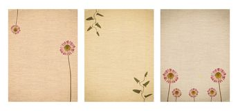 Ajuste da vária textura velha do papel do vintage com plantas secas e a flor isoladas imagens de stock