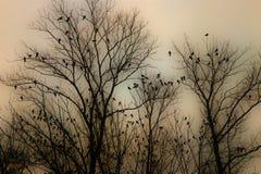 Ajuste das ?rvores secas completo de p?ssaros pequenos Foto da silhueta foto de stock