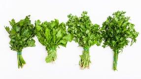Ajuste das ervas frescas do verde do corte no branco Fotos de Stock Royalty Free