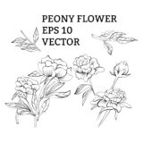 Ajuste das flores da peônia no vetor no fundo branco ilustração do vetor