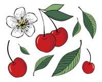 Ajuste das ilustrações das cerejas e das folhas, isoladas no fundo branco ilustração royalty free