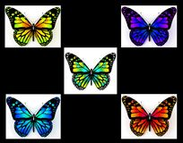 Ajuste das imagens das borboletas Fotografia de Stock