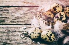 Ajuste de Pascua con los huevos de codornices Fotografía de archivo libre de regalías