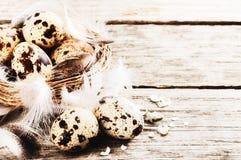 Ajuste de Pascua con los huevos de codornices Fotos de archivo libres de regalías
