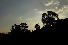 Ajuste de Sun atrás da árvore Imagem de Stock Royalty Free