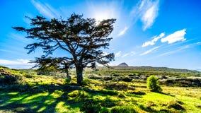 Ajuste de Sun atrás de uma grande árvore no cabo da boa reserva natural da esperança Fotografia de Stock