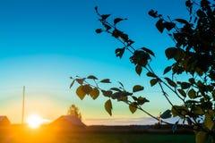 Ajuste de Sun de medianoche detrás de las hojas del abedul Fotos de archivo libres de regalías