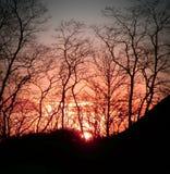 Ajuste de Sun a través de los árboles Imágenes de archivo libres de regalías
