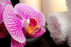 Ajuste de ZENES Stone con descensos, ramita floreciente del balneario de la orquídea Imagen de archivo
