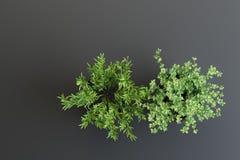 Ajuste decorativo de dos plantas en floreros stock de ilustración