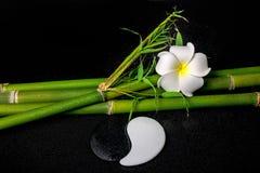 Ajuste del balneario de la flor blanca del frangipani, del símbolo Yin Yang y del natu Fotografía de archivo