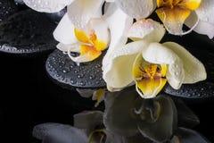 ajuste del balneario de la orquídea blanca (phalaenopsis), ZENES Stone Fotos de archivo