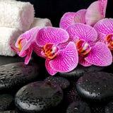 Ajuste del balneario de la ramita floreciente de la orquídea violeta pelada Fotos de archivo