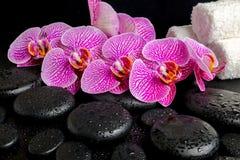 Ajuste del balneario de la ramita floreciente de la orquídea violeta pelada Fotos de archivo libres de regalías
