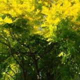 Ajuste del otoño adentro Fotografía de archivo libre de regalías