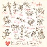 Ajuste desenhos das ervas para menus do projeto, receitas Fotografia de Stock