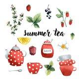 Ajuste do chá do verão, os utensílios de mesa, e as bagas e os frutos das plantas, ilustração do vetor